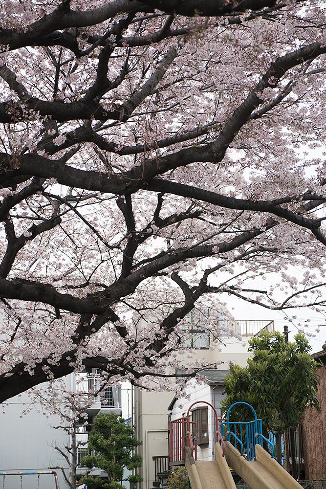 【Ingressアハ体験】第18回: 花よりスキャナ! リアルCFが張られる季節がやってきた